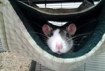 Small Animal Rescues / Rescues that have other types of small animals available for adoption.