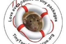 TTR's Rescues of the Month / http://www.thetravelinrat.org/rescue-of-the-month.html  Every month, TTR showcases a rat-centric rescue for for our Rescue of the Month. We offer numerous ways for generous donors to help the Rescue of the Month, usually consisting of several stores who donate a portion of their proceeds raised to the rescue. Please check out these great rescues and consider helping them during their month. We thank you all so much!