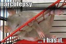 Rattie LOLs