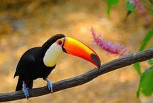 Toucan Favorites  / A bord about my number 1 favorite Animal