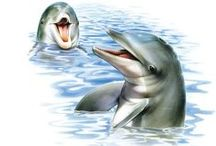 Dolphins & Friends (Favorites) / Picture's of my number 1 Animal                                          Dolphins (especially Bottlenose Dolphins)