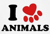 Another Animal Favorite  / These are honorable Mentions of Animals I like!