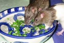 Rattie Enrichment