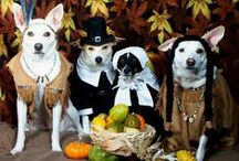 Cool pets in costumes
