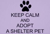 About Small Animal Rescues / Ways to help small animal rescues as well as general information and inspiration on animal rescue/