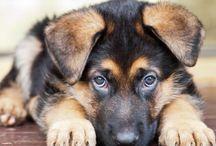 Cute and precious