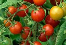 Gardening / I Love Fresh Fruits and Veggies....