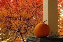 festive fall / Autumn, Halloween & Thanksgiving / by Louise