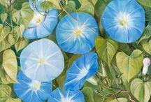 Flowers in art / Flowers in art
