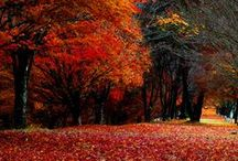 "Colors of ""Fall"" / by Jeannie Kirking"