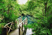 PUNTACANA Ecological Park,  PUNTACANA Resort & Club, Punta Cana, Dominican Republic / Location Photo Shoot