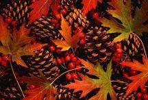 Fabulous Fall