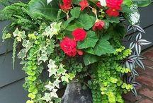 Flower Pot Power / Flowering Pots