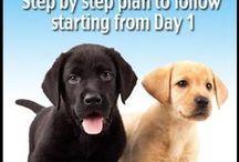 brookes pet business ideas / by Jesse Prentiss
