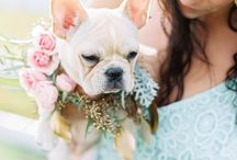 Mascotas en tu boda / Nuestro mejor amigo también va de boda