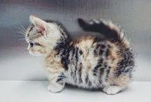 Cats <3 / I love cats! <3 Neko neko! <3