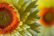 WILDFLOWERS / Sharing the joy of wildflowers.