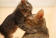 Funny Cats / by Pet Supplies & Pet Products