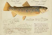 Ilustraciones de Pesca de Trucha