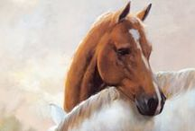 animals - horse art / by Bev Nethercote