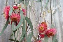 AUSSIE CHRISTMAS / Nature inspired Christmas ... the Australian way!