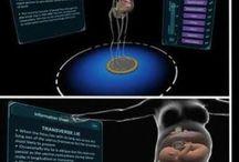Réalité Virtuelle / Les nouveautés dans le domaine de la réalité virtuelle. L'utilisation de la réalité virtuelle pour mieux former dans le médical notamment. La réalité virtuelle nouvel enjeu marketing.