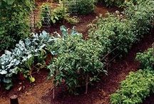 Gardening / Everything about the natural and organic garden right here.