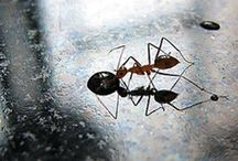 Natural Pesticides / Don't use dangerous chemicals to kill bugs! Mother nature already has natural pesticides for us to use. Diatomaceous earth and other household items can do the job and do it much safer. DE works on ants, cockroaches, bed bugs, ticks, fleas, and much more.