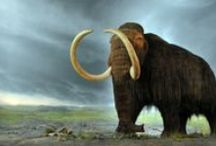 Battling Animal Extinction / Check out this text set to learn more about extinct species and what is being done to save those that are endangered.