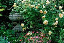 Wohnen Garten