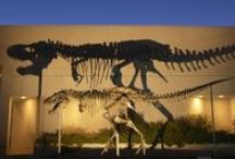 Can You Dig It? Paleontological Discoveries