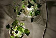 ♧♧♧LiTTle GarDen♧♧♧ / #terrarium #green #gardening #cactus #tinygarden