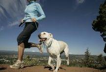 Pet Health/Wellness