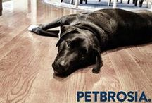 #PetbrosiaLife / Learn more about the Petbrosia team, Our pets, office fun, and local events that we attend