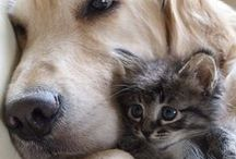 Cute Feline's and Fido's / Adorable Photos of Dogs and Cats brought to you by Petbrosia.com
