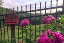 Gardening - My backyard / Gardening, Spring, Summer, Autumn, Winter, Flowers, Herbs, Trees, Bulbs, Seeds,  Cherry Blossom, Outside, Yard, Outdoors, Plants,  Nursery, Decoration, Planting Ideas,
