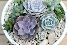 SUCCULENTS / Ways to arrange succulents into a beautiful display
