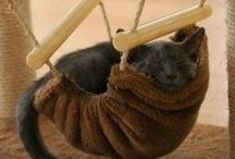 DIY Pet Fun!