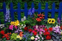 Gardeners Know All The Best Dirt / Garden, patio, deck ideas / by Jane