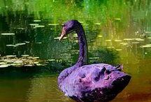 Wisteria / The Colour Purple & All / by joseph maia