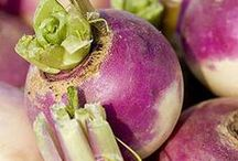 Turnips / Although the turnip has been grown for more than 4,000 years and was one of the first foods to be cultivated in Europe, it is currently under appreciated: It keeps well, takes to almost any cooking method, and has a subtly flavored, tasty flesh.  Season: Year-round; peak October through February.