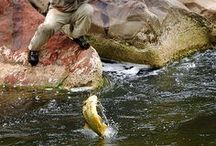 Fishing / Shots and inspiration for those of us who enjoy fishing.