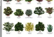 PLANTS MyGreenSpace