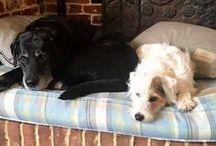 Stylish Tartan Dog Beds