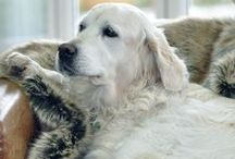 Faux Fur Pet Blankets