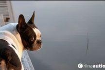 """dog's / """"Kuvia eläimistä elämäni varrella."""""""