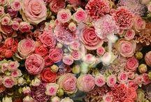 Flowers & more Flowers