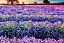 Provensálsky štýl / Milujeme kombináciu bielej, smotanovej a fialovej, levandulovej. Pôsobí žensky a rafinovanovane :-)