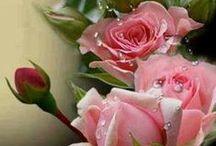 Mis Flores / Hermosas flores que demuestran la grandeza y la ternura del Creador ...Flores - Rosas - Girasoles - Orquideas - Ortencias - Tulipanes -  Begonias -  Lirios - .... +