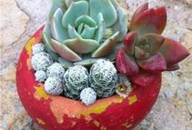Succulent Gardening / by Anna Miranda (LuLuGoesGaga)